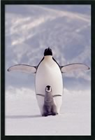  Penguin and Chick Framed Art Gel Coated AA169882